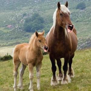 Ricky-Horse-3