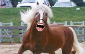 Ricky-Horse