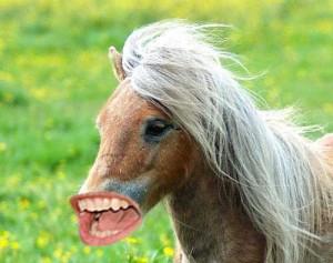 Ricky-Horse-5